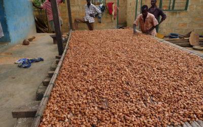 Les dessous du cacao… histoire choc